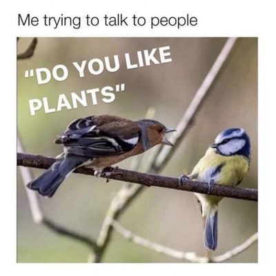 do you like plants